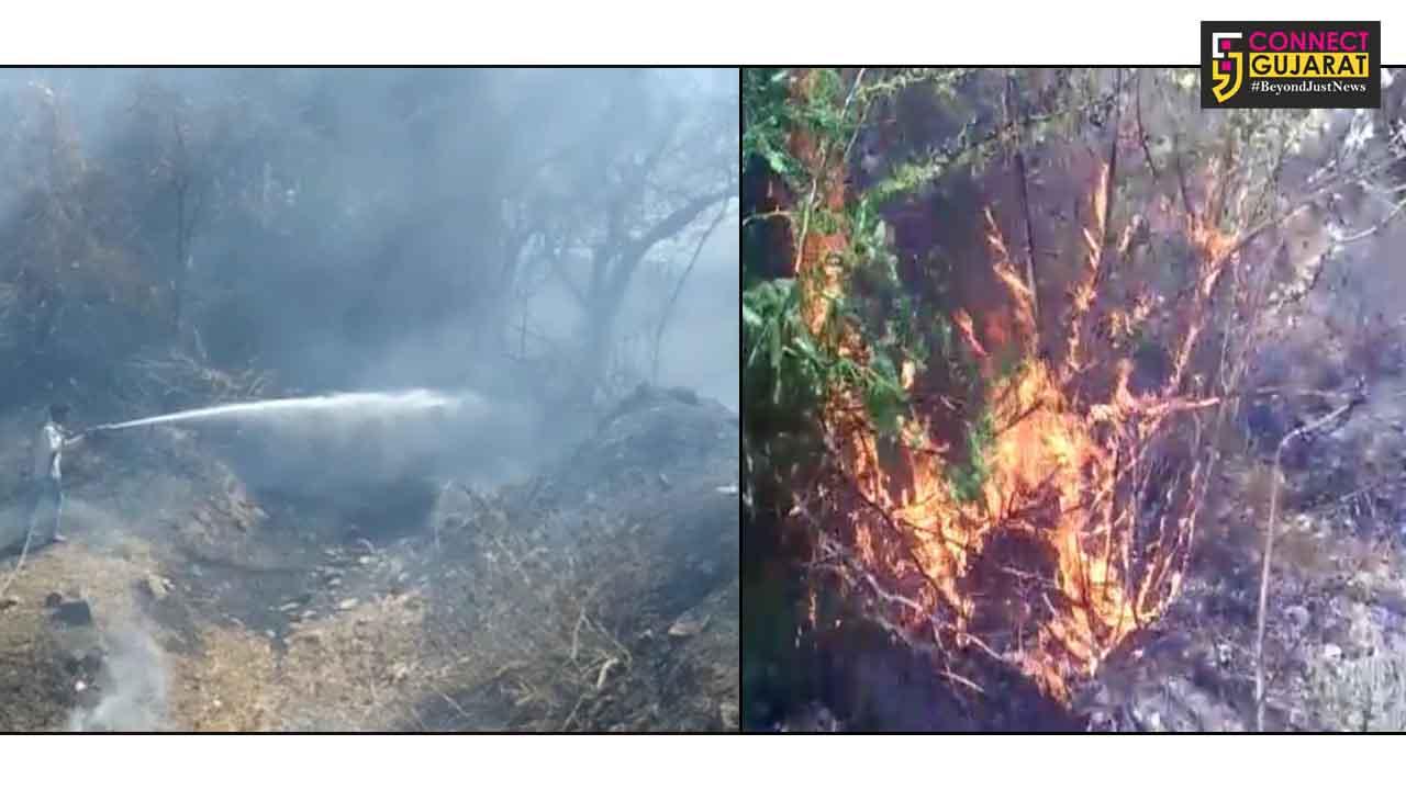 અરવલ્લી :  મેઘરજના ડેરી કંપા નજીક જંગલોમાં લાગી આગ