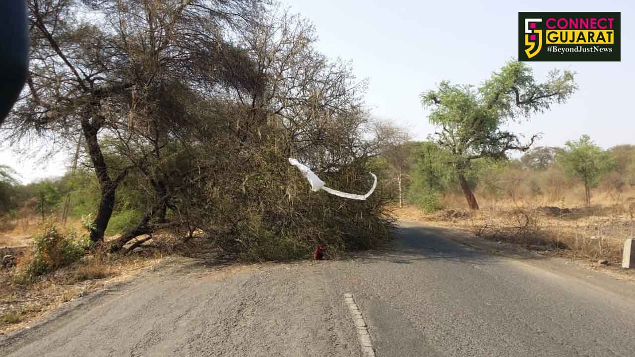 પાલેજ-ભરૂચ માર્ગ પર ભૂખીખાડી પાસે બાવળનું વૃક્ષ ધરાશાયી થતા વાહનવ્યવહાર ખોરવાયો