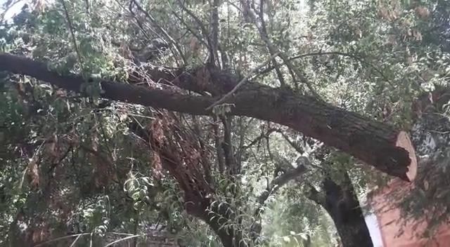 ભરૂચના બંબાખાના નજીકના ચંદનના વૃક્ષની કરાઇ ચોરી