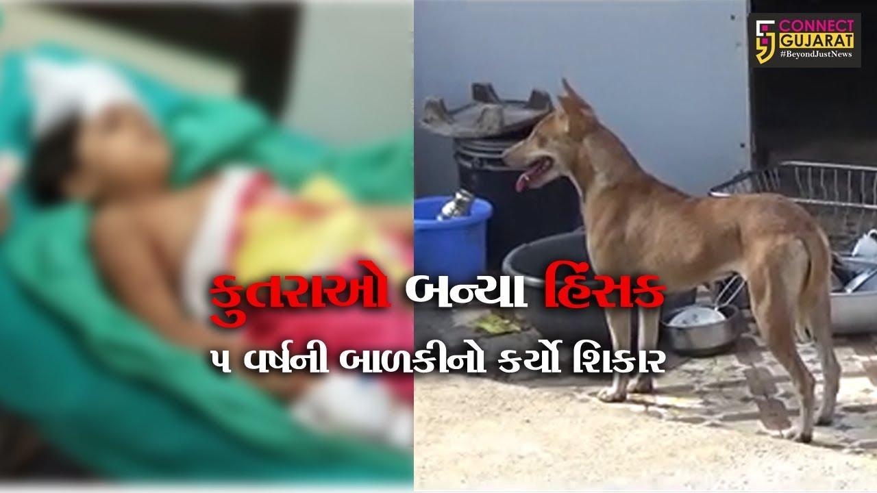 સુરત: વરાછા વિસ્તારમાં રહેતા એક પરિવારની ૫ વર્ષની બાળકી પર બે હિંસક કૂતરાઓએ કર્યો હુમલો