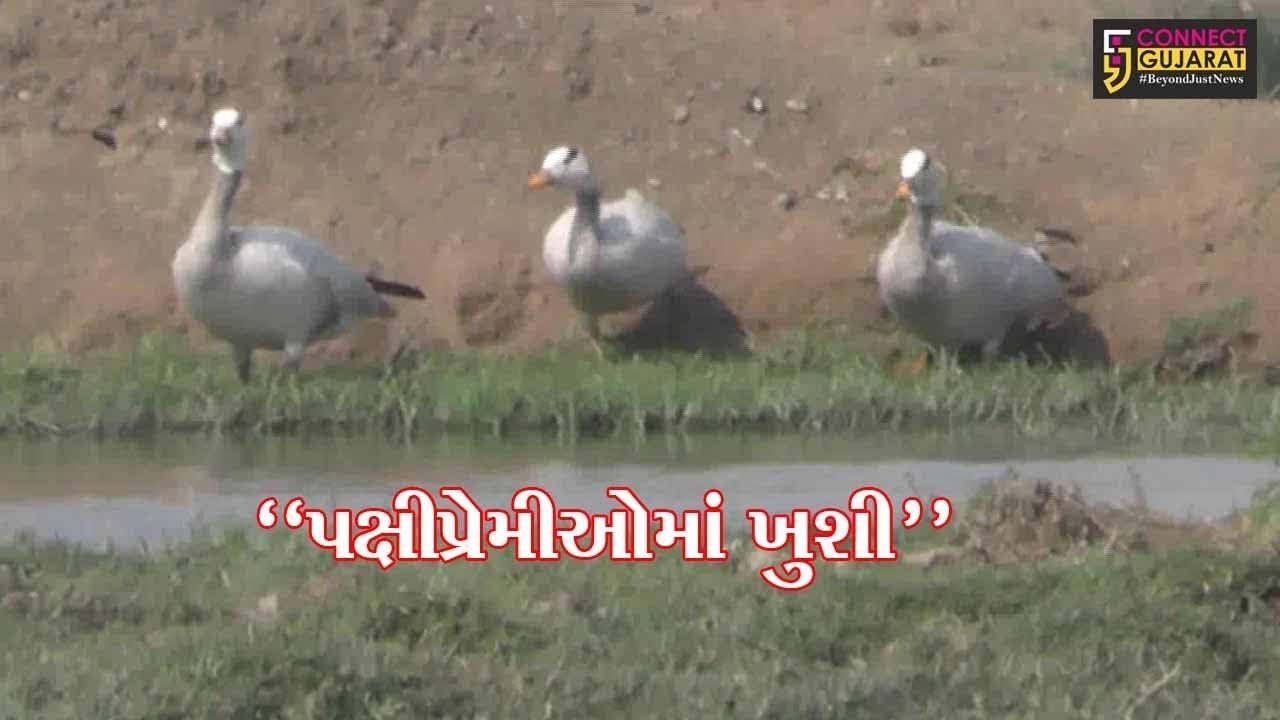 """""""પક્ષી પ્રેમીઓમાં ખુશી"""" : હિમાલય સર કરી ભારતમાં આવતા રાજહંસ બન્યા ભાવનગરના મહેમાન"""
