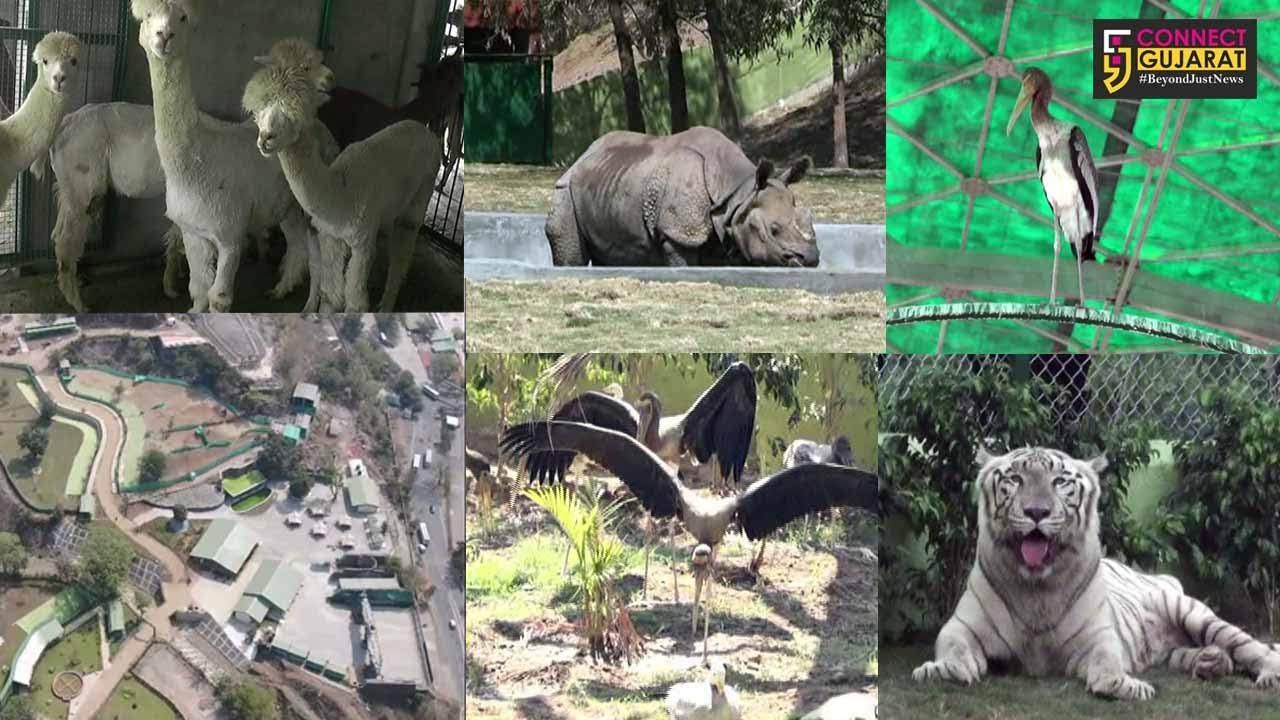 નર્મદા : કેવડીયા ખાતે ઝુઓલોજીકલ પાર્ક આજથી પ્રાયોગિક ધોરણે શરૂ, વિદેશી પશુ-પક્ષીઓ બનશે આકર્ષણનું કેન્દ્ર