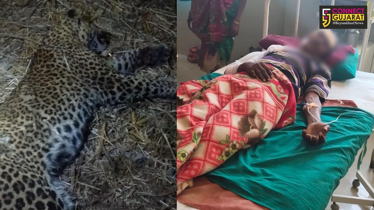 ડાંગ : અંજનકુંડ ગામે દીપડાએ કર્યો હુમલો, આધેડે સ્વબચાવમાં લાકડીના સપાટા મારતા દીપડાનું મોત