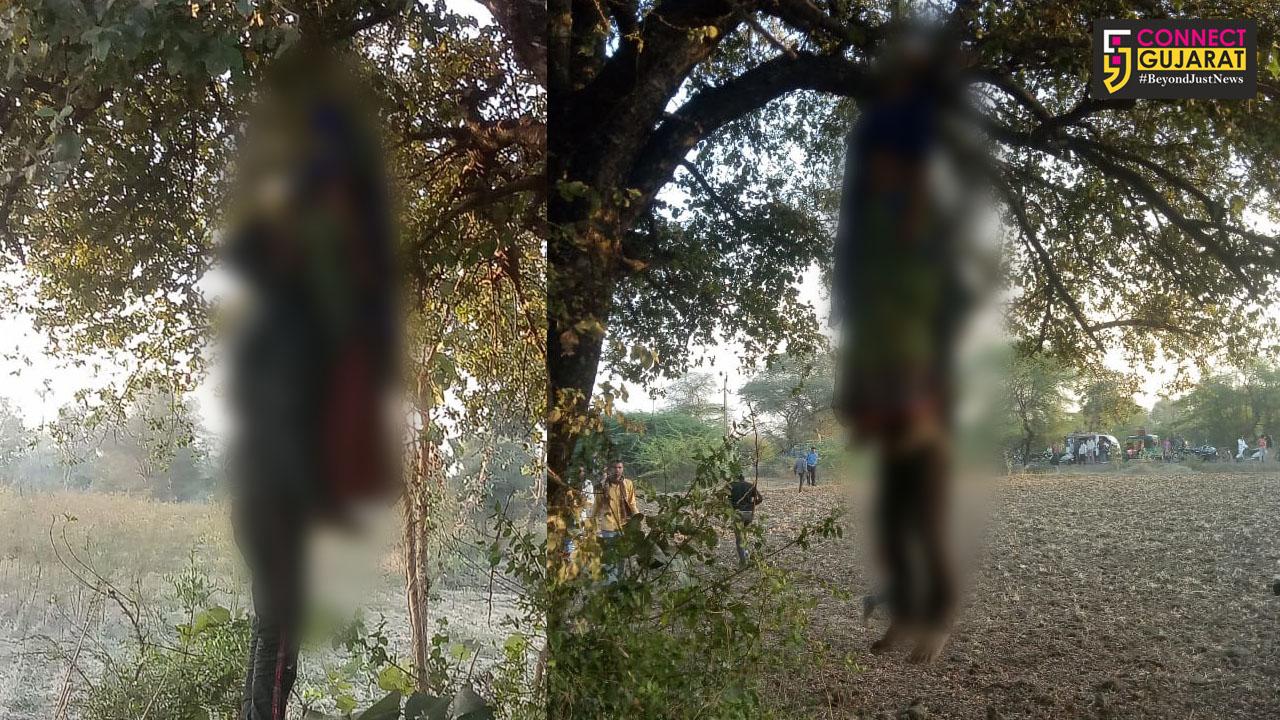 પંચમહાલ : પ્રેમના તાંતણે બંધાયેલા પ્રેમી પંખીડાએ કર્યો આપઘાત, કાલોલ નજીક મૃત હાલતમાં ઝાડ પર લટકતા મળી આવ્યા