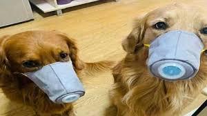 કોરોના વાયરસનો હાહાકાર : હોંગકોંગમાં પાલતું કુતરાઓને ચુંબન કરવા પર પ્રતિબંધ