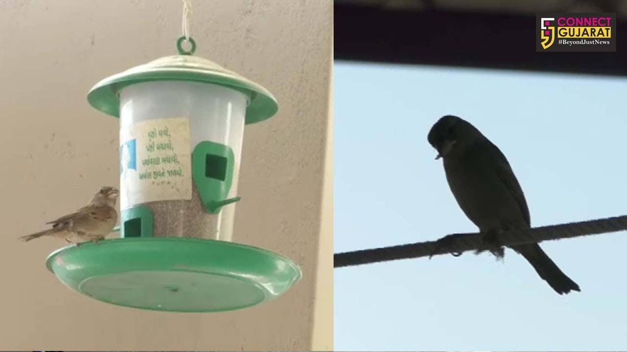 """""""વિશ્વ ચકલી દિવસ"""" : સુરેન્દ્રનગરના પક્ષીપ્રેમીએ 20થી વધુ ચકલી ઘર બનાવ્યા, 50થી વધુ ચકલીઓની કરે છે સેવા"""